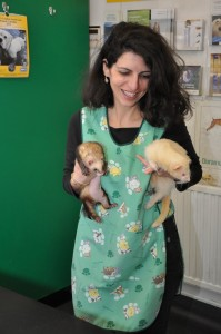 Jenny with the Practice ferrets