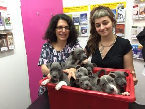 A box of Puppies